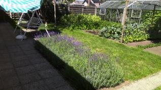 our garden (640x360)